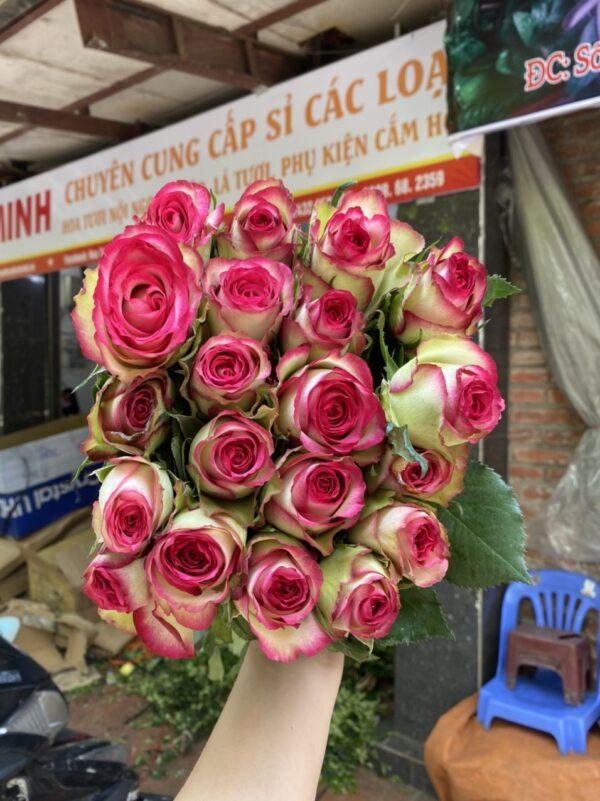 Hoa hồng hỷ xanh đà lạt