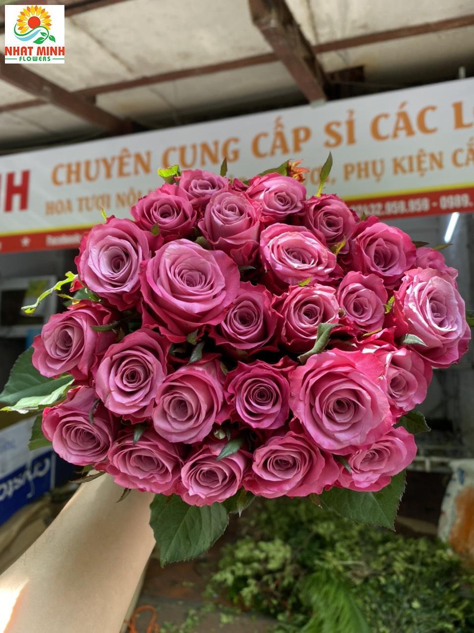 Hoa hồng tím xoáy đà lạt